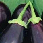 patlıcan sapıyla hemoroid tedavisi